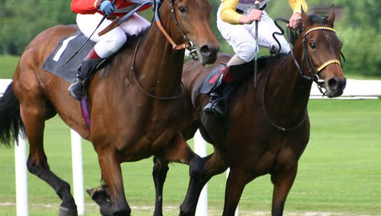 Hong Kong Horse Racing Results